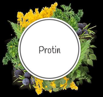 putika - naravni izdelki za napade protina in simptome protina